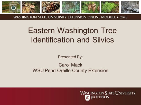 Eastern Washington Tree Identification and Silvics- online module cover