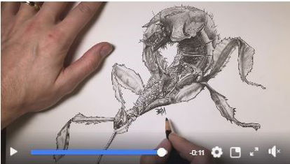 Picture of Giant Prickly Insect Print Artwork